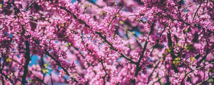 האביב