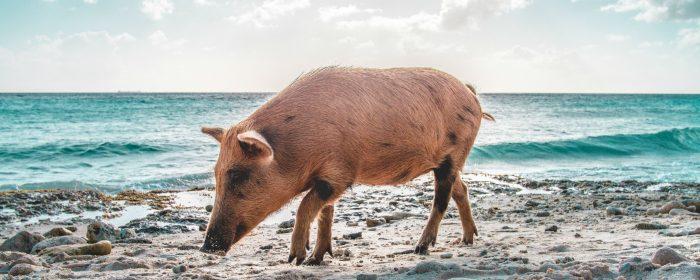 שנת Ji Hai- חזיר אדמה